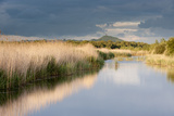 Reed Beds and View Towards Glastonbury Tor from Rspb Reserve, Somerset Levels, Somerset, UK Photographic Print by Ross Hoddinott