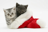 Silver and Grey Kittens in a Father Christmas Hat Photographic Print by Mark Taylor