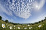 Wildflower Meadow with Ox-Eye Daisy (Leucanthemum Vulgare), Hardington Moor Nnr, Somerset, UK Photographic Print by Guy Edwardes