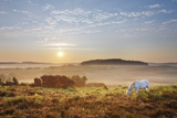 New Forest Pony Grazing on Latchmore Bottom at Dawn, the New Forest National Park, Hampshire, UK Photographic Print by Guy Edwardes
