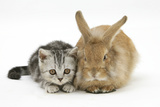 Silver Tabby Kitten and Sandy Lionhead Rabbit Photographic Print by Mark Taylor