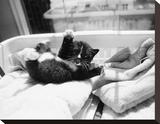 Kitten Laundry Stretched Canvas Print by Kim Levin