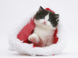 Black-And-White Kitten in a Father Christmas Hat Photographic Print by Mark Taylor