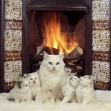 White Cat and Kittens in Front of a Log Fire Photographic Print by Mark Taylor
