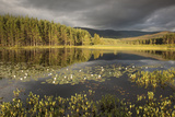 Stormy Light over Bog, Glenfeshie, Cairngorms Np, Highlands, Scotland, UK, August 2010 Photographic Print by Peter Cairns