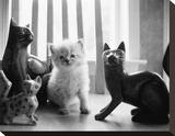 Ragdoll Kitten Stretched Canvas Print by Kim Levin
