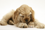 Buff American Cocker Spaniel Puppy, China, 10 Weeks, with a Dwarf Russian Hamster Photographic Print by Mark Taylor