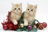 Ginger Kittens with Tinsel and Christmas Decorations Photographic Print by Mark Taylor