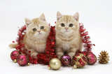 Two Ginger Kittens with Red Tinsel and Christmas Decorations Photographic Print by Mark Taylor
