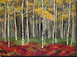 Aspen Forest Stretched Canvas Print by Miro Kenarov