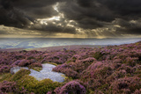 Scenic View of Moorland Habitat Showing Flowering Heather in Foreground, Peak District Np Photographic Print by Ben Hall