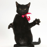 Black Kitten, Buxie, 3 Months Old, Wearing a Pink Bow Photographic Print by Mark Taylor