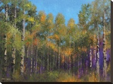 Aspen Autumn Stretched Canvas Print by Thomas Stotts