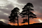 Two Scots Pine Trees (Pinus Sylvestris) Silhouetted at Sunset, Glen Affric, Scotland, UK Photographic Print by Peter Cairns