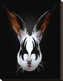 Rabbit Rocks Stretched Canvas Print by Robert Farkas