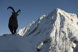 Alpine Ibex (Capra Ibex Ibex) Silhouetted in Snow, Gran Paradiso Np, Italy, November Photographic Print by E. Haarberg