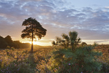 Sunrise on Hatchet Moor, New Forest Np, Hampshire, England, UK, August 2011 Photographic Print by Guy Edwardes