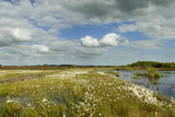 Panoramic View of Ballynahone Bog at Dawn, County Antrim, Northern Ireland, UK, June 2011 Photographic Print by Ben Hall