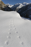 Tracks of Mouse in Snow in Alpine Landscape, Gran Paradiso National Park, Italy, November 2008 Photographic Print by E. Haarberg