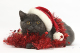 Grey Kitten with Red Tinsel and Wearing a Father Christmas Hat Photographic Print by Mark Taylor