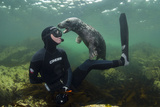 Young Grey Seal (Halichoerus Grypus) Playing with Snorkeller, Farne Islands, Northumberland, UK Photographic Print by Alex Mustard