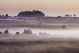 View over New Forest Lowland Heathland from Rockford Common at Dawn, Linwood, Hampshire, UK Photographic Print by Guy Edwardes