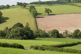 Intensivly Farmed and Grazed Farmland Next to Denmark Farm Conservation Centre, Lampeter, Wales, UK Photographic Print by Ross Hoddinott