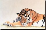 Sleeping Tiger Stretched Canvas Print by Jan Henderson