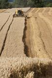 Combine Harvester Harvesting Oats, Haregill Lodge Farm, North Yorkshire, England Fotografisk tryk af Paul Harris