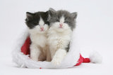 Sleepy Black-And-White and Grey-And-White Kittens in a Father Christmas Hat Photographic Print by Mark Taylor