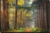 Colors of the Forest Stretched Canvas Print by Lars Van de Goor