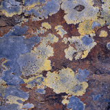 Lichen and Rock Detail, Coigach - Assynt Swt, Sutherland, Highlands, Scotland, UK, June Photographic Print by Joe Cornish