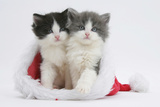 Two Black-And-White and Grey-And-White Kittens in a Father Christmas Hat Photographic Print by Mark Taylor