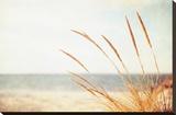 Warm Breeze Stretched Canvas Print by Carolyn Cochrane