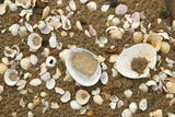 Shells on Tide Line, Sandyhills Bay, Solway Firth, Dumfries and Galloway, Scotland, February Photographic Print by Mark Hamblin