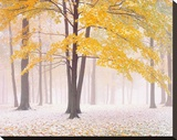 Early Autumn Snow Stretched Canvas Print by Jim Becia