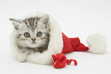 Tabby Kitten in a Father Christmas Hat with a Christmas Decoration Mouse Photographic Print by Mark Taylor