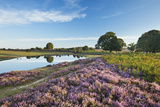 New Forest Heathland with Ling (Calluna Vulgaris), Bell Heather (Erica Sp.) and Pool, Hampshire, UK Photographic Print by Guy Edwardes