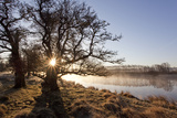River Spey in Spring, Sun Rising Behind Trres, Cairngorms National Park, Scotland, March 2012 Photographic Print by Peter Cairns