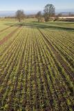 Early Oat Fields, Haregill Lodge Farm, Ellingstring, North Yorkshire, England, UK, January Fotografisk tryk af Paul Harris