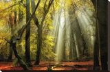 Yellow Leaves Rays Stretched Canvas Print by Lars Van de Goor
