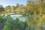 Panoramic View of the River Itchen, Ovington, Hampshire, England, UK, May. 2020Vision Exhibition Photographic Print by Guy Edwardes