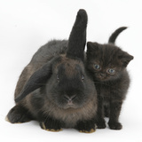 Black Kitten and Black Rabbit Photographic Print by Mark Taylor
