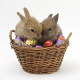 Two Baby Lionhead-Cross Rabbits in a Wicker Basket with Easter Eggs Lámina fotográfica por Mark Taylor