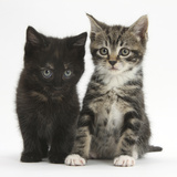 Tabby and Black Kittens Photographic Print by Mark Taylor