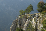 Pine Trees on the Edge of the Susica Canyon, Durmitor Np, Montenegro, October 2008 Photographic Print by  Radisics