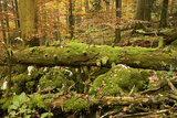 Corkova Uvala, Forest with Silver Fir, Spruce and European Beeches in Autumn, Plitvice Np, Croatia Photographic Print by  Biancarelli