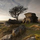 Hawthorn Tree (Crataegus Monogyna) and Granite Outcrop Near Saddle Tor, Dartmoor Np, Devon, UK Photographic Print by Ross Hoddinott