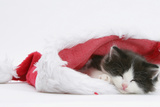 Black-And-White Kitten Sleeping in a Father Christmas Hat Photographic Print by Mark Taylor