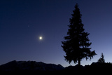 Pine Tree at Night with Moon Shining, on Stuoc Peak, Durmitor Np, Montenegro, October 2008 Photographic Print by  Radisics